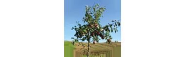 Baumpate werden